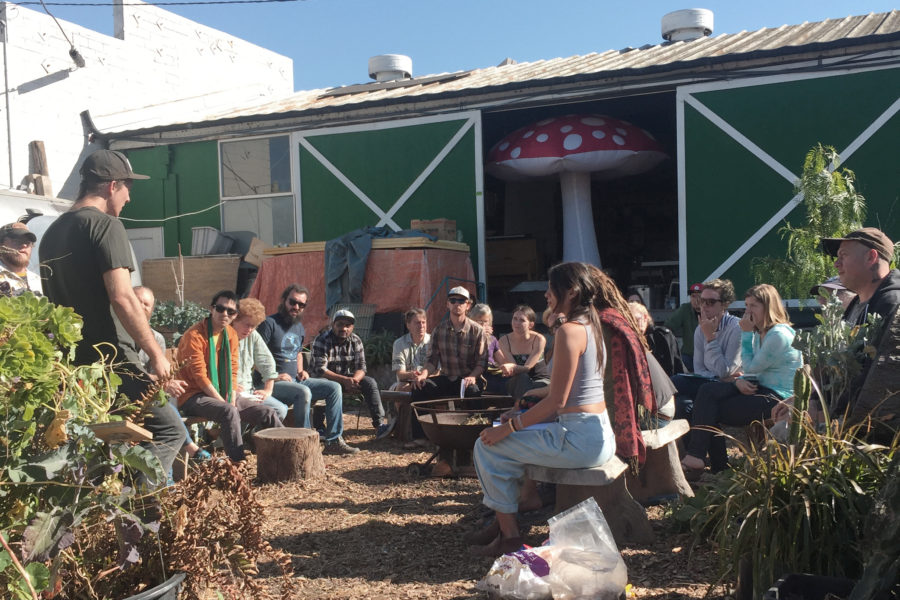Radical Mycology – Mushroom cultivation course