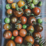 Dutch Bucket Tomatoes